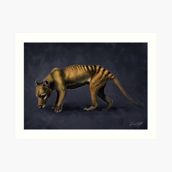 Thylacine Art Print