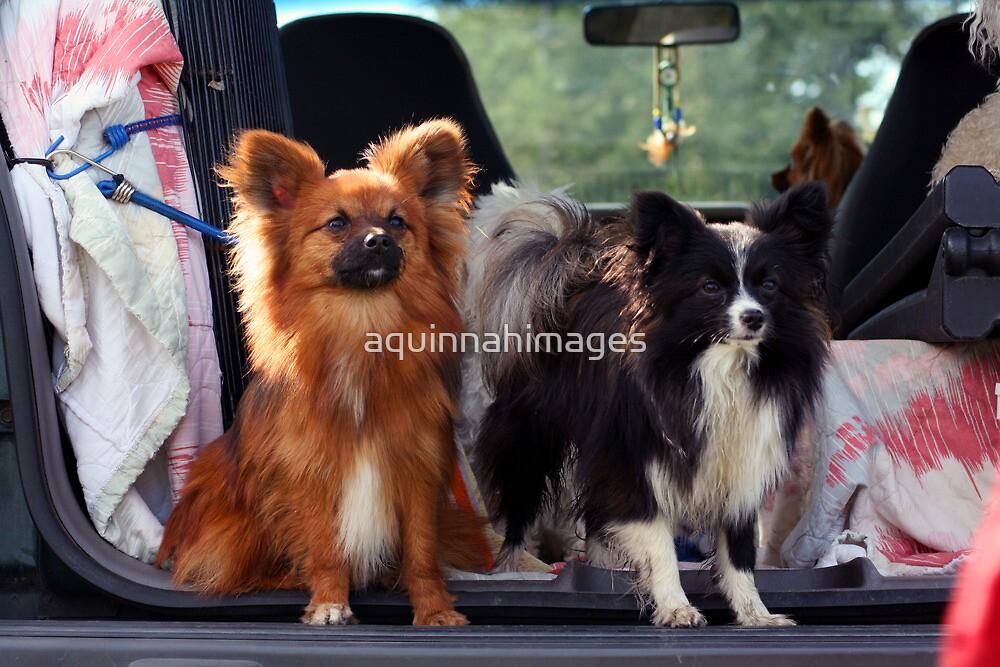 Pups by aquinnahimages