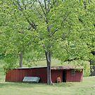 My Yard by Barry Elkins