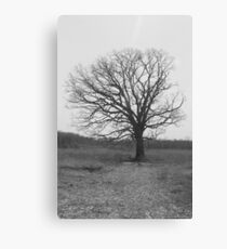 Under the Old Tree Canvas Print