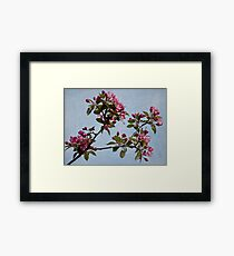 April Blossoms Framed Print