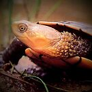 To...to...tortoise... by mariatheresa