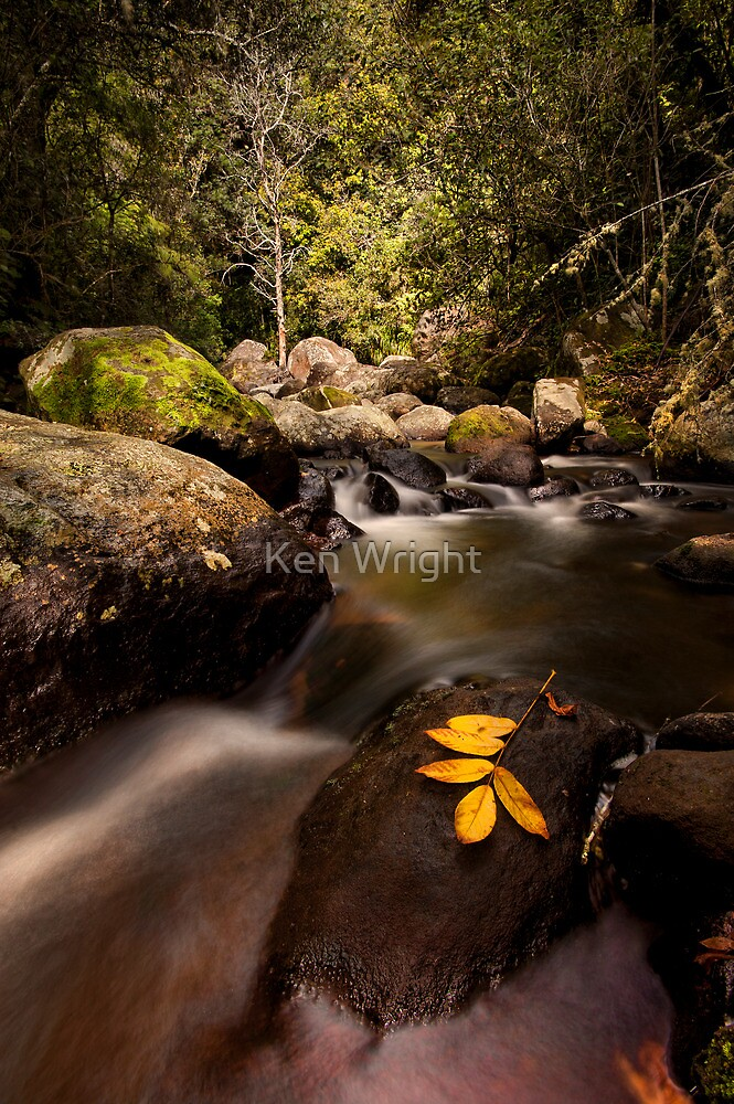 Kaiate Autumn Gold by Ken Wright