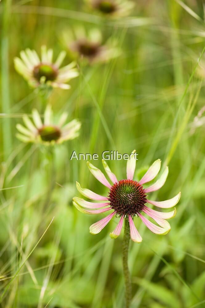 Green Envy by Anne Gilbert
