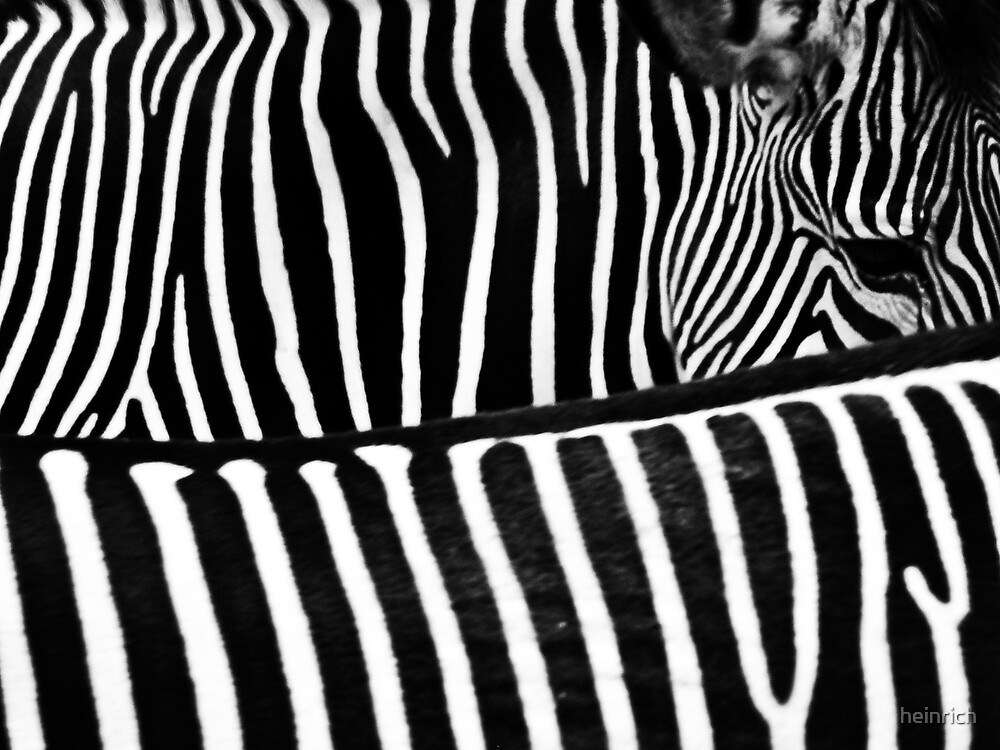 Zebra Crossing by heinrich