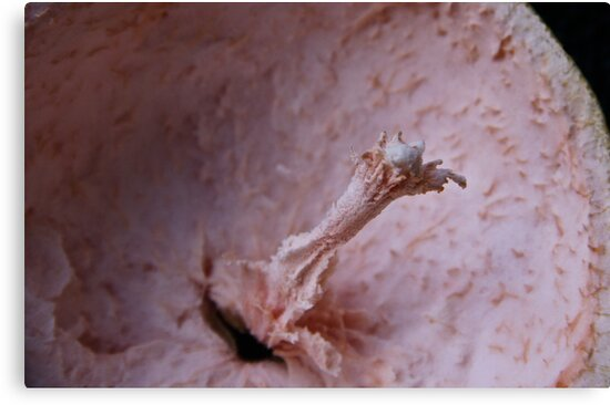 What Am I?- A Pink Grapfruit - Solved by Misfits..  by Heather Friedman