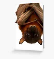 Little Red Flying Fox Hanging Out  Greeting Card