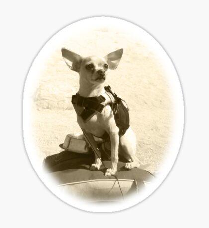 Chihuahua and the Kayak Adventure Sticker
