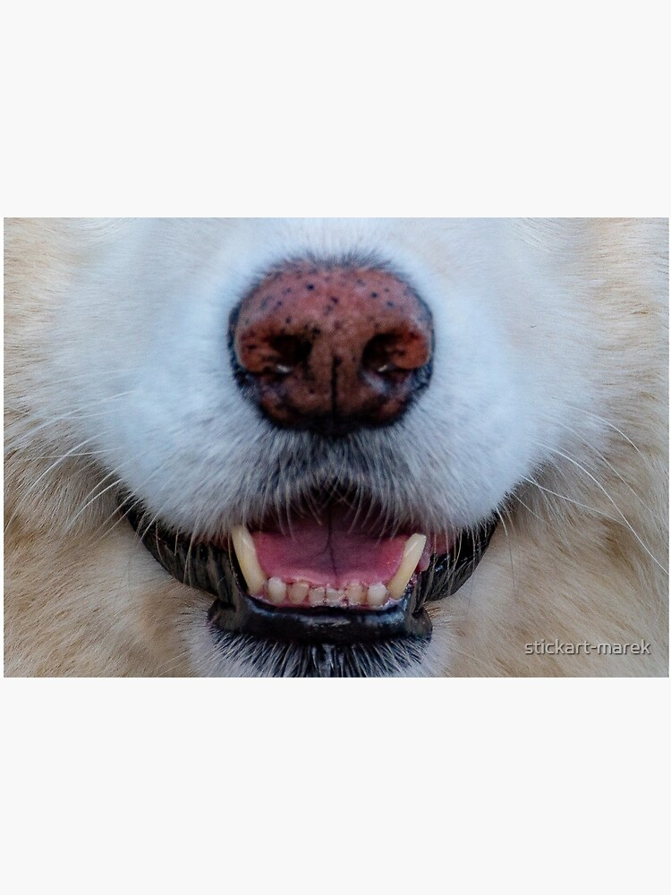 dogs nose by stickart-marek