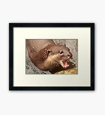 Smooth Coated Otter Framed Print