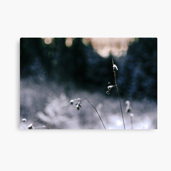 Frosty Flowers Canvas Print