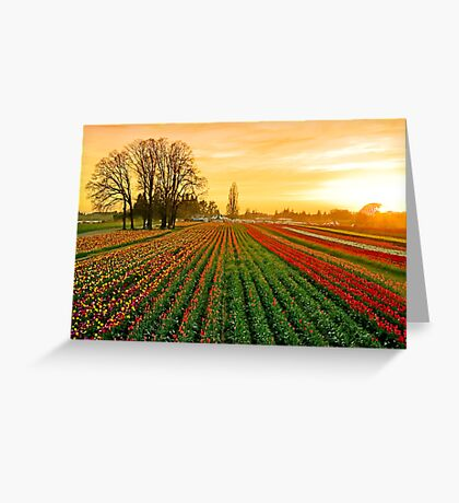 Dusk At The Wooden Shoe Greeting Card