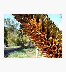 Yellow flowers with sap Photographic Print