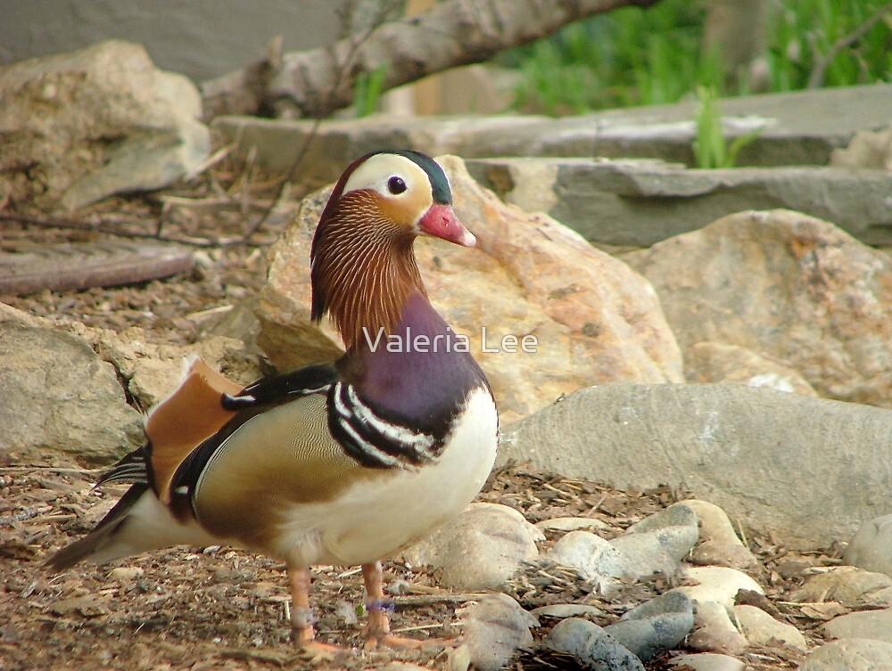 Pretty Bird by Valeria Lee