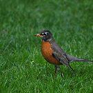 Hey Robin by Robin Black
