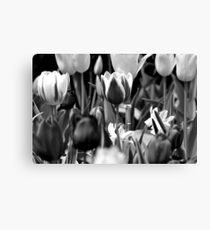 Black and White Tulips Canvas Print