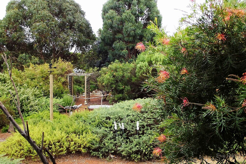Our Garden by Eve Parry