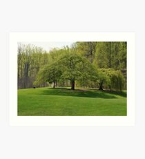 Weeping Willow at the Gardens Art Print