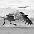 Liftoff! by Robin Black