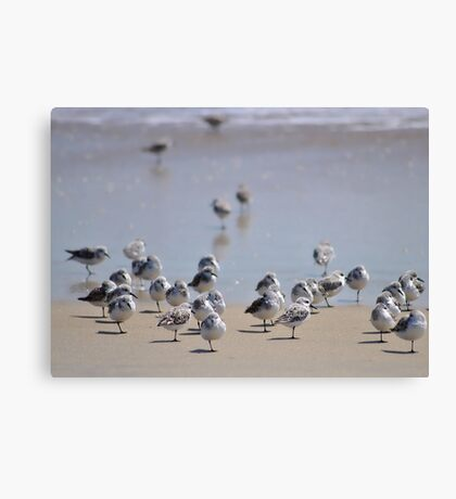 One-legged Shorebirds Canvas Print