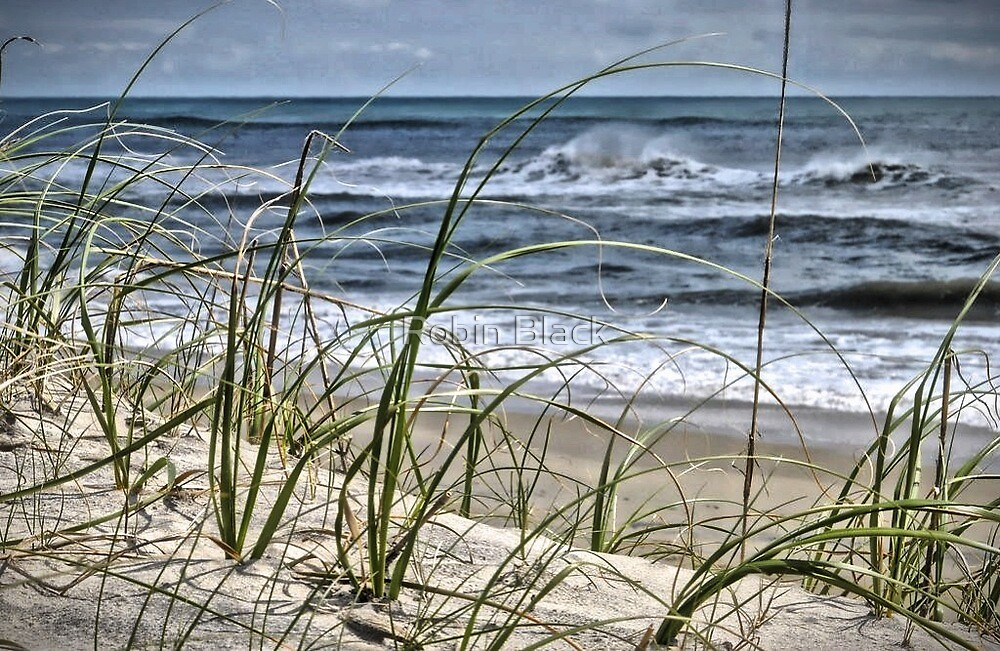 Sea Oats by Robin Black