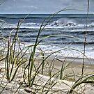 Sea Oats by Robin Black