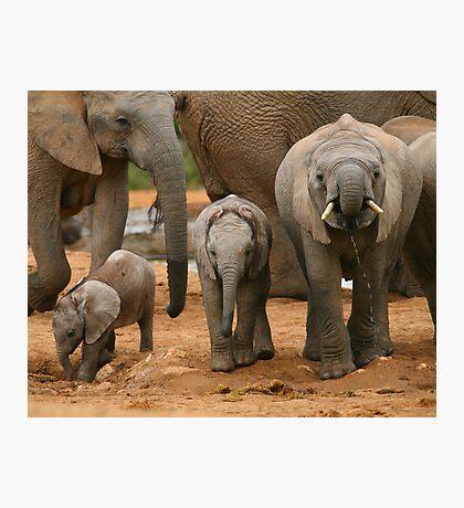 Baby African Elephants II Photographic Print