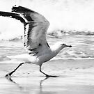 Seagull lift off by Anna Phillips