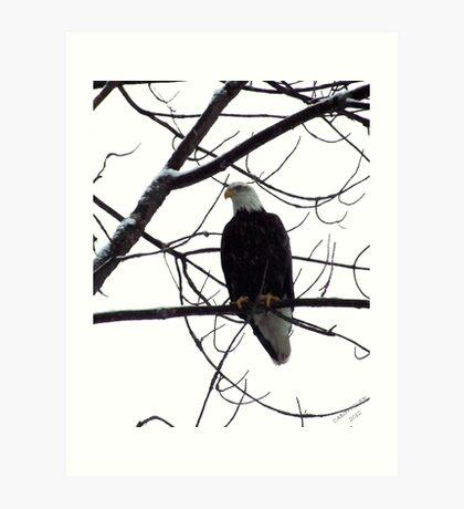 A Watchfule Eye Art Print