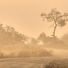 Morning Mist by Prasad