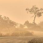 Morning Mist by Prasad