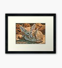 Fennec Fox Framed Print