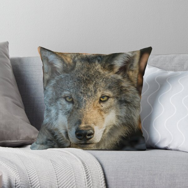 Timber Wolf - Looking at you. Throw Pillow