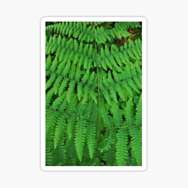 Lady Ferns Sticker