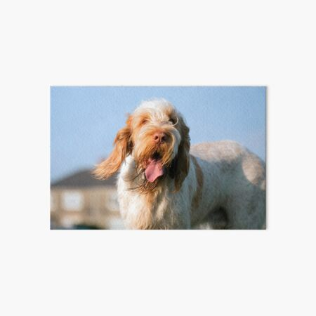 Windy day Spinone Art Board Print