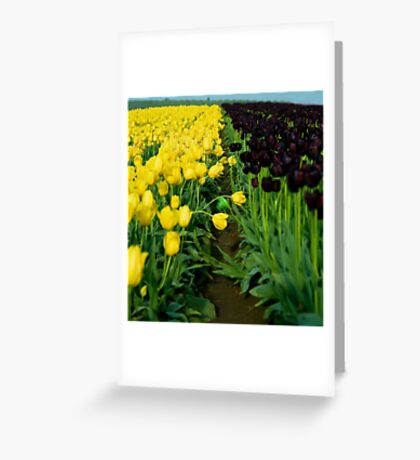 Strong Gold & Queen Of The Night Greeting Card