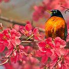 Rockin' Robin by jules572