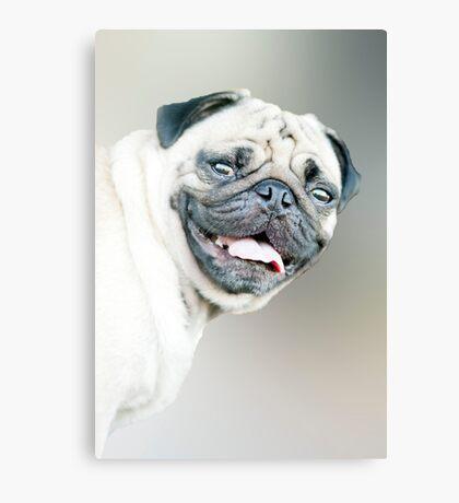 Winston - pug portrait :) Canvas Print