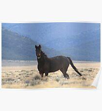 Dark Stallion Poster