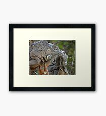 Nice To Meet You - Me Gusta Verte Framed Print
