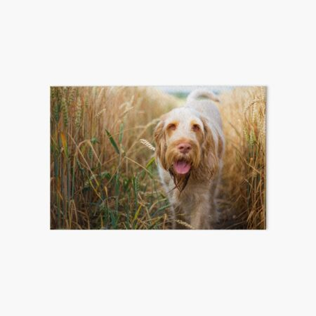 Coming back to you Spinone Art Board Print