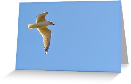 Seagull by Mark Fendrick