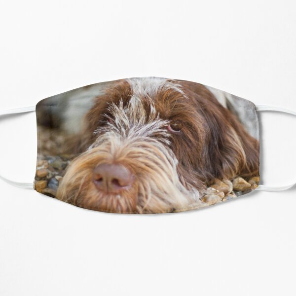 Lying down Spinone Mask