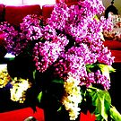 Lillacs in bloom by Heidi  Jacobsen