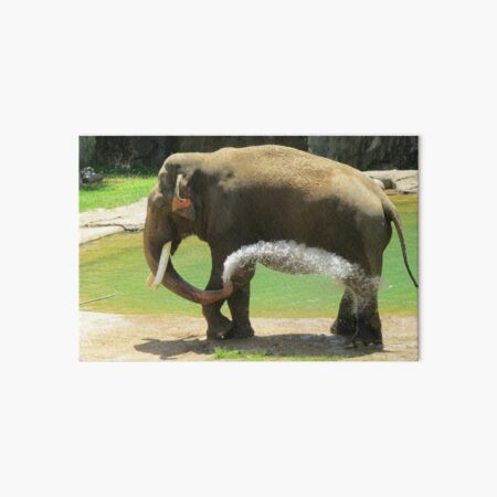 Asian Elephant Spike at the National Zoo Art Board Print