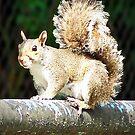 Mississippi Squirrel by Terri Chandler
