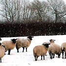 Sheep in the snow by TesniJade