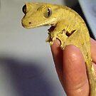 My crested gecko Arwen by Dragonflye2