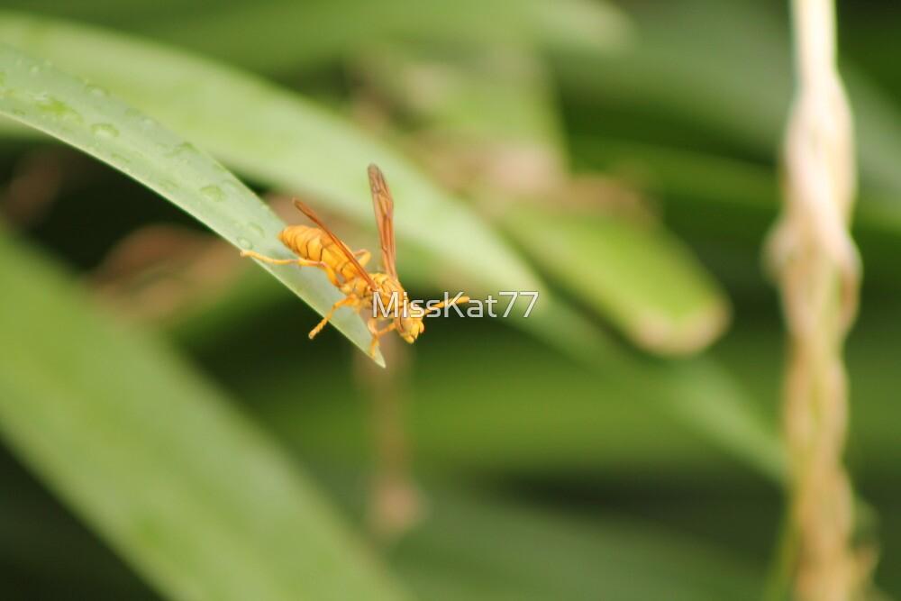 A Yellow Paper Wasp (Polistes Flavus) in Fiji. by MissKat77