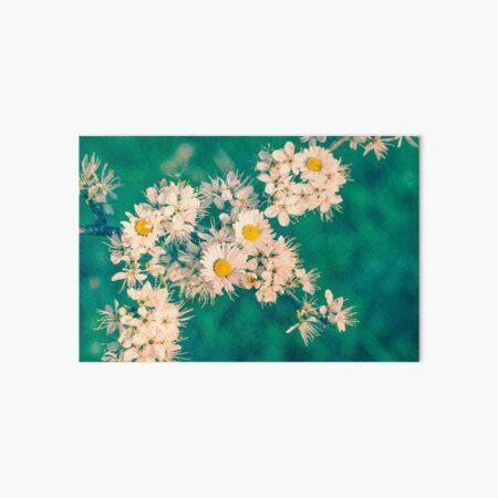 Daisies and Blackthorn Blossom Art Board Print